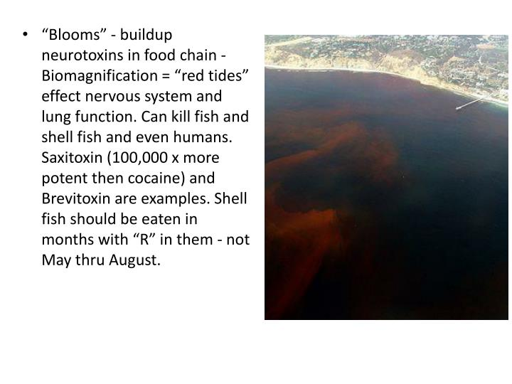 """Blooms"" - buildup neurotoxins in food chain - Biomagnification = ""red tides"" effect nervous system and lung function. Can kill fish and shell fish and even humans. Saxitoxin (100,000 x more potent then cocaine) and Brevitoxin are examples. Shell fish should be eaten in months with ""R"" in them - not May thru August."