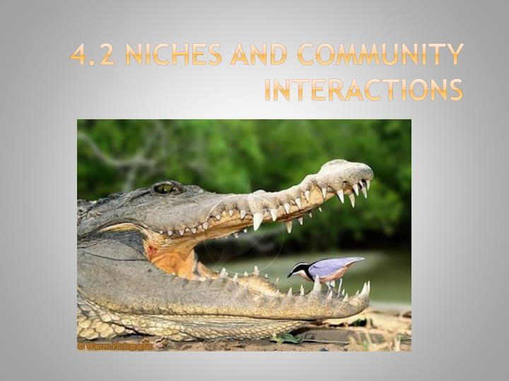 PPT - 4.2 Niches and Community Interactions PowerPoint ...