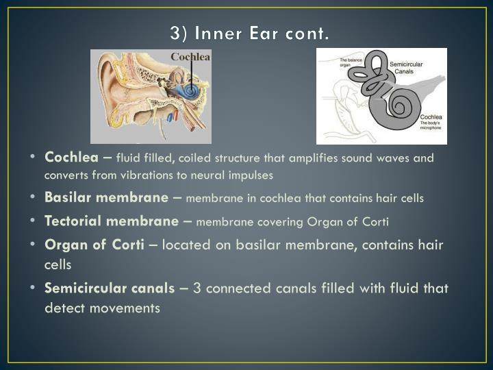 3) Inner Ear cont.