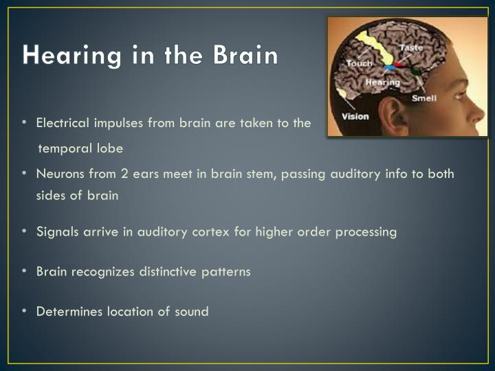 Hearing in the Brain