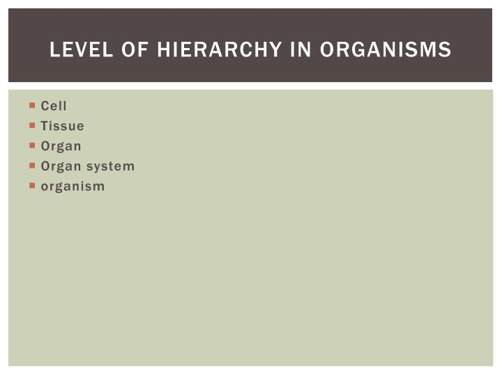 Level of Hierarchy in organisms