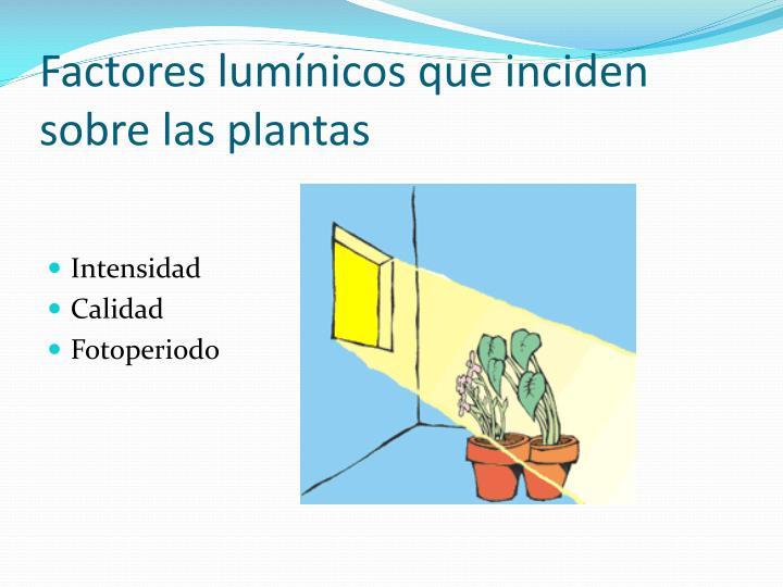 Factores lumínicos que inciden sobre las plantas