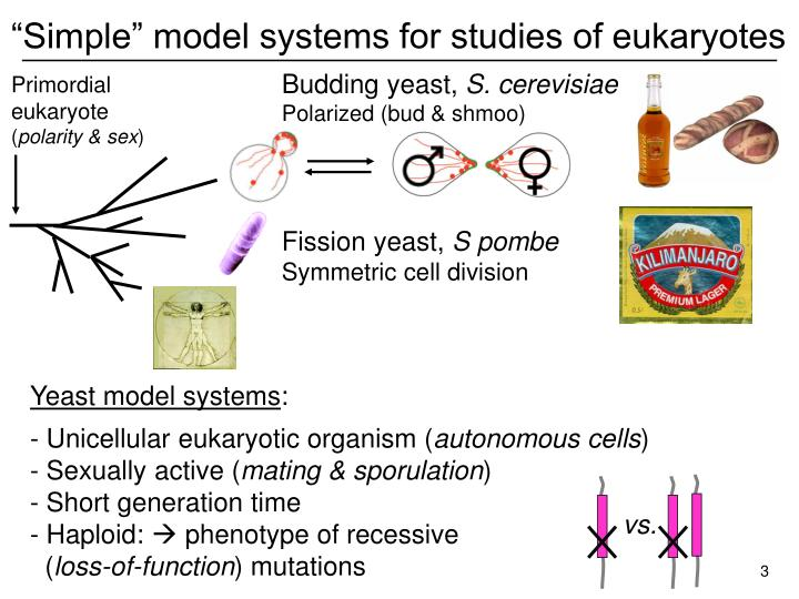 """Simple"" model systems for studies of eukaryotes"