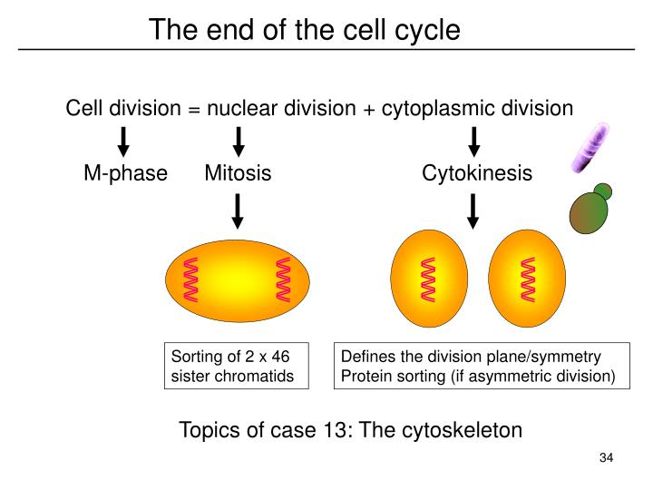 The end of the cell cycle