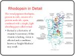 rhodopsin in detail