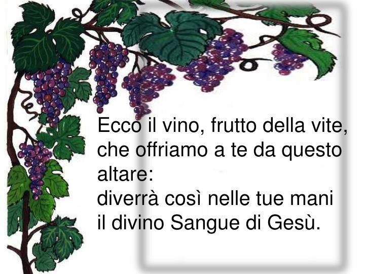 Ecco il vino, frutto della vite,