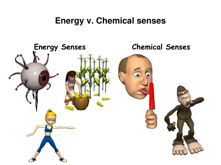 chemical senses An appreciation of the flavor of foods requires the diverse interaction of several sensory systems taste and smell are the principal systems for distinguishing flavors however, tactile, thermal, and nociceptive sensory input from the oral mucosa contributes to food quality saliva also is an.