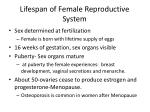 lifespan of female reproductive system