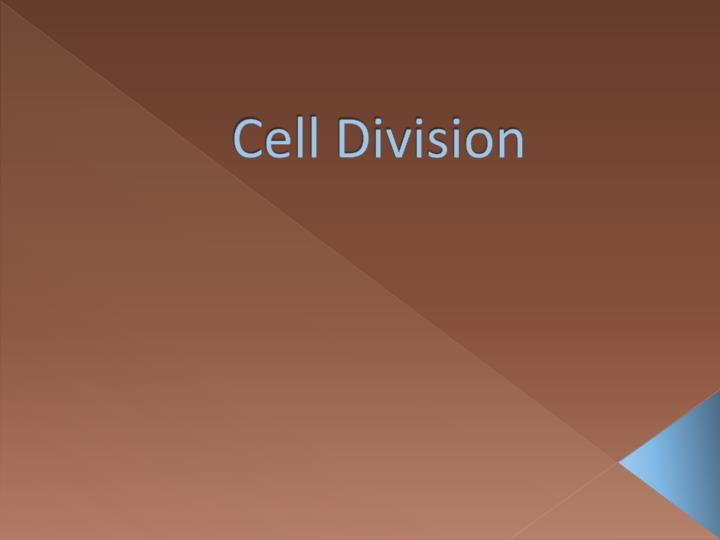 cell division n.