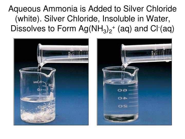 Aqueous Ammonia is Added to Silver Chloride (white). Silver Chloride, Insoluble in Water, Dissolves to Form Ag(NH