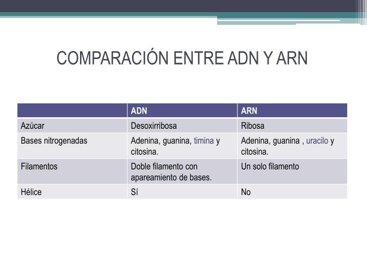 COMPARACIÓN ENTRE ADN Y ARN