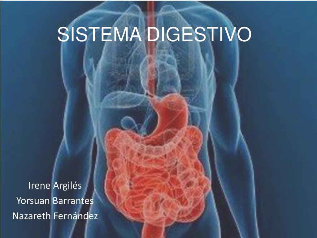 PPT - SISTEMA DIGESTIVO PowerPoint Presentation - ID:1978052