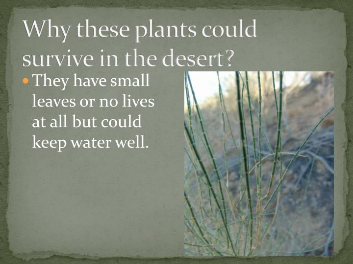 Why these plants could survive in the desert?