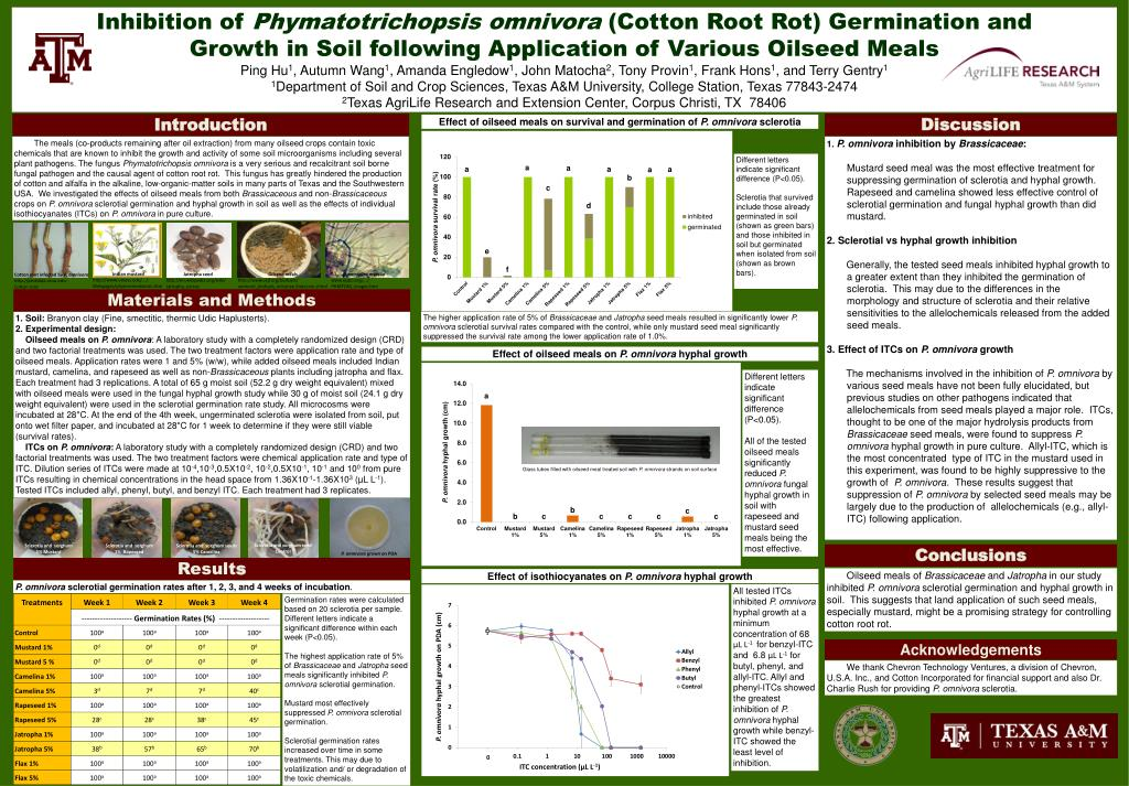 Ppt Inhibition Of Phymatotrichopsis Omnivora Cotton Root Rot Germination And Powerpoint Presentation Id 1978738