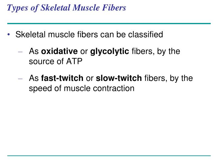 Types of Skeletal Muscle Fibers