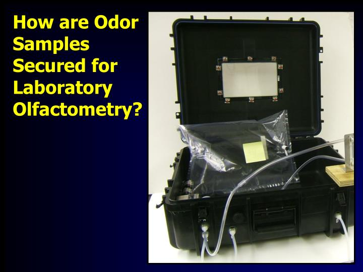 How are odor samples secured for laboratory olfactometry
