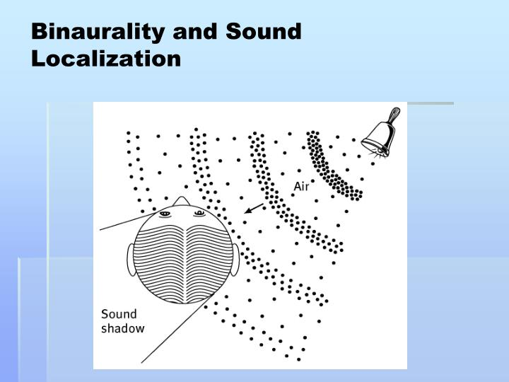 Binaurality and Sound Localization