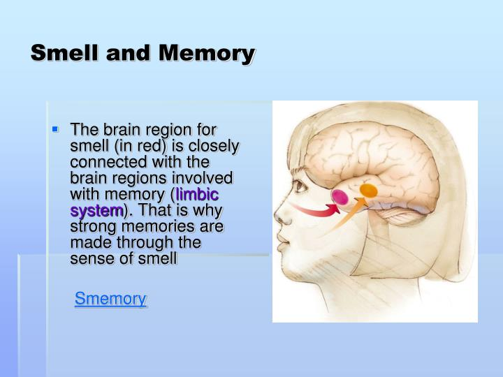 Smell and Memory