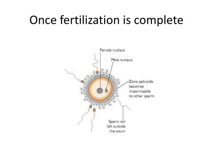 Once fertilization is complete