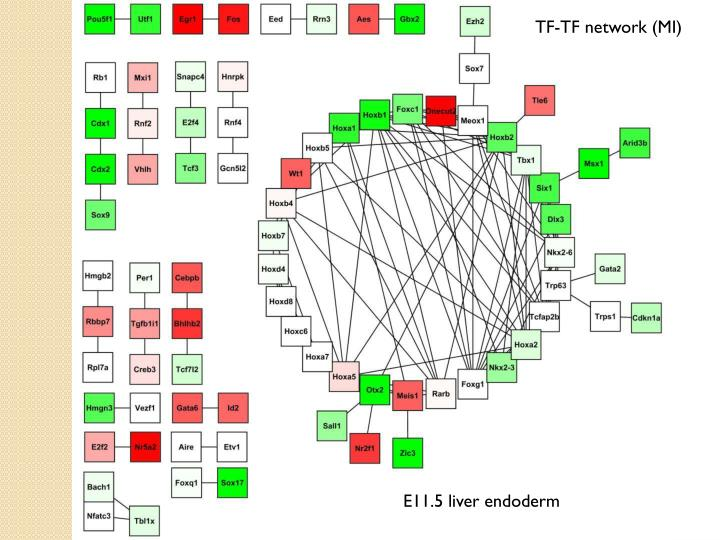TF-TF network (MI)