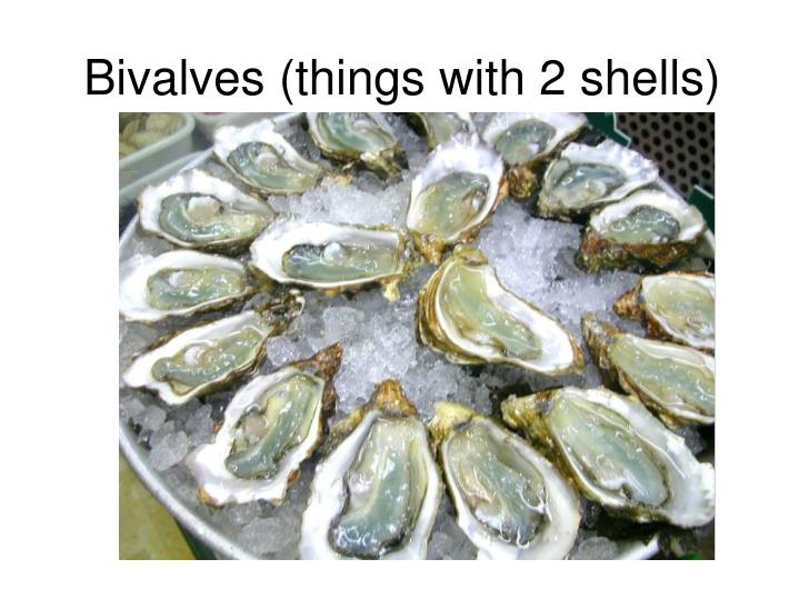 Bivalves (things with 2 shells)