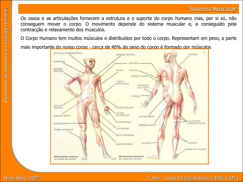Ppt Nuno Melo 2007 Powerpoint Presentation Free Download