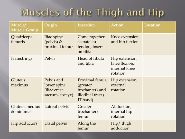 Muscles of the Thigh and Hip