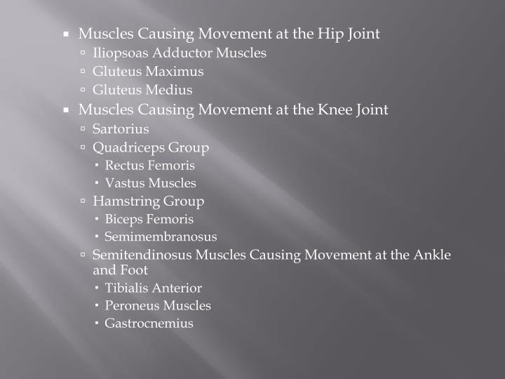 Muscles Causing Movement at the Hip Joint