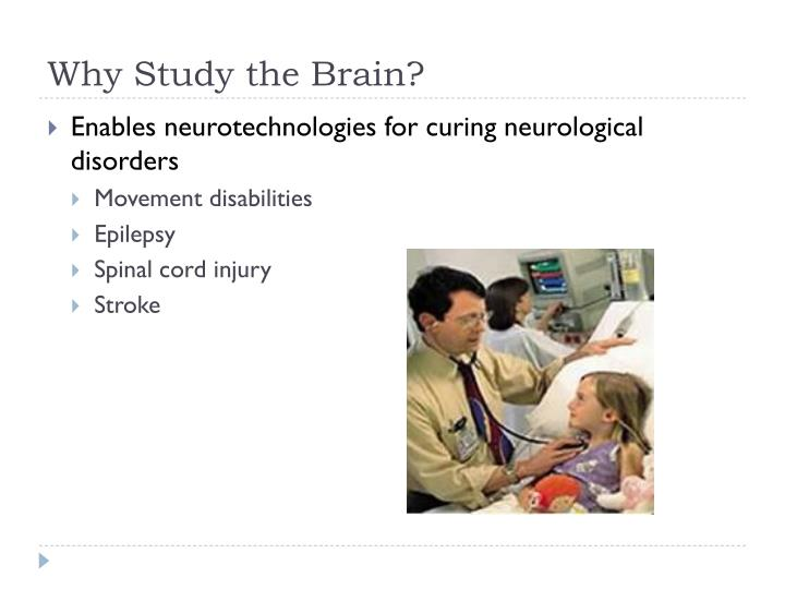 Why study the brain