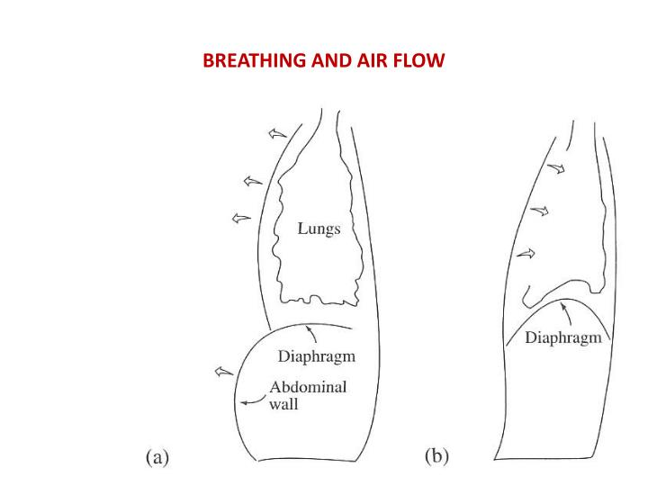 BREATHING AND AIR FLOW