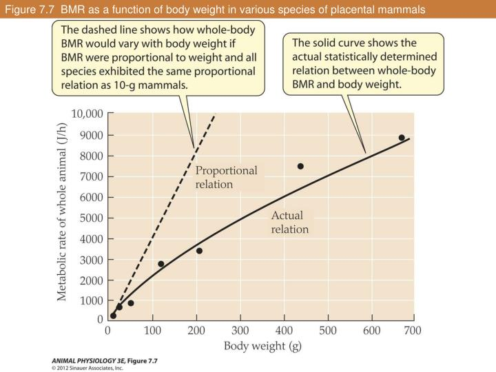 Figure 7.7  BMR as a function of body weight in various species of placental mammals