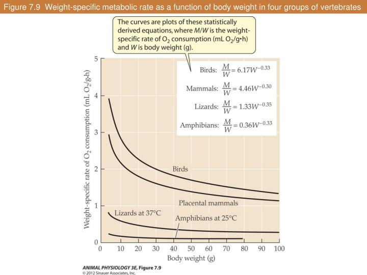Figure 7.9  Weight-specific metabolic rate as a function of body weight in four groups of vertebrates