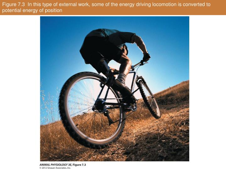 Figure 7.3  In this type of external work, some of the energy driving locomotion is converted to potential energy of position