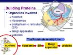 building proteins1