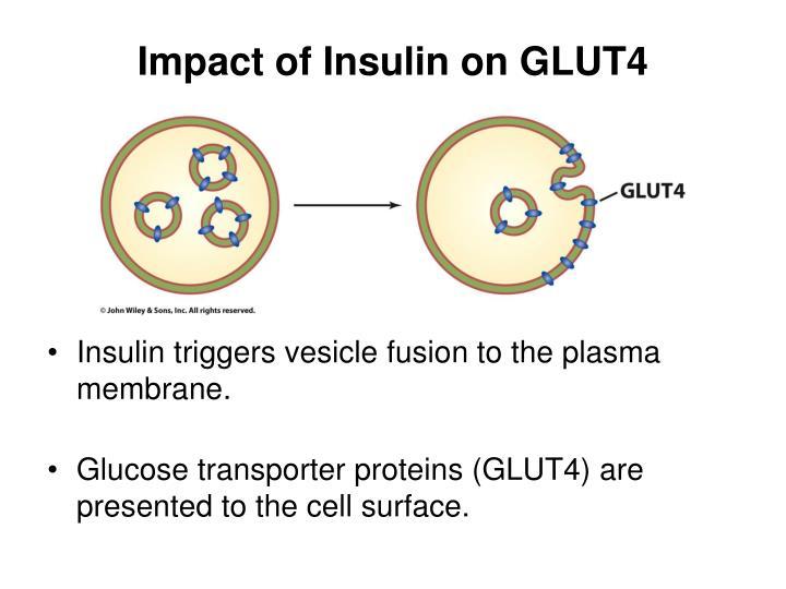 Impact of Insulin on GLUT4