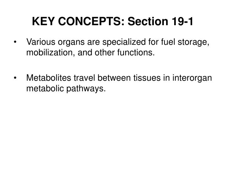 Key concepts section 19 1