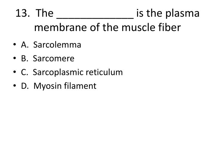 13.  The _____________ is the plasma membrane of the muscle fiber