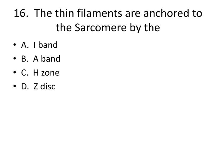 16.  The thin filaments are anchored to the Sarcomere by the