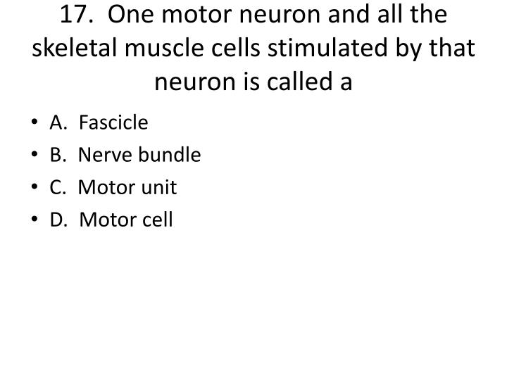 17.  One motor neuron and all the skeletal muscle cells stimulated by that neuron is called a