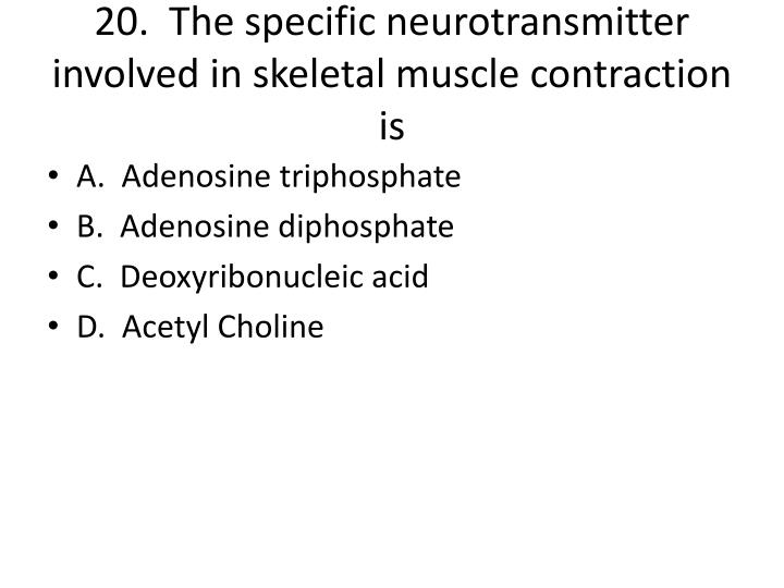 20.  The specific neurotransmitter involved in skeletal muscle contraction is