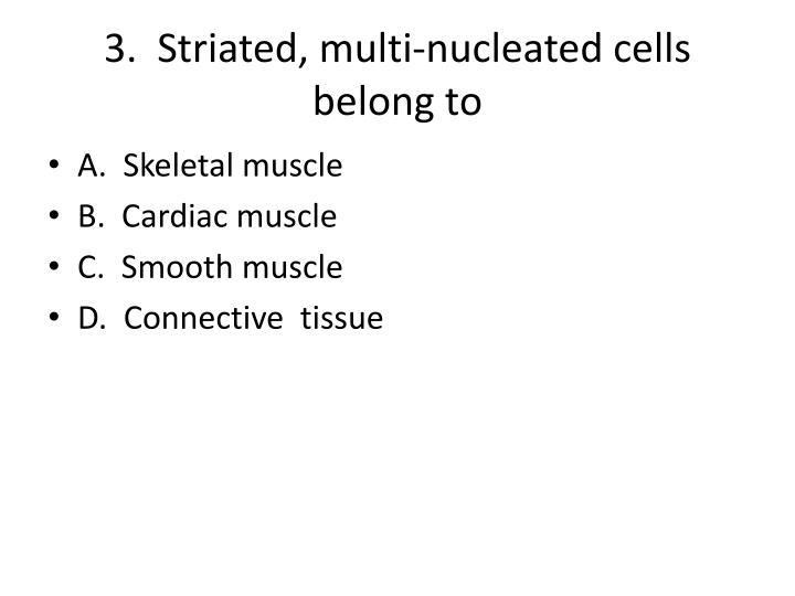 3 striated multi nucleated cells belong to