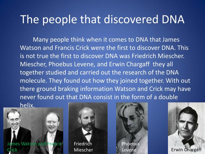 the discovery of dna It's commonly believed that james watson and francis crick discovered the double helix shape of dna but in fact, they based their work on one of their colleagues at king's college in london.