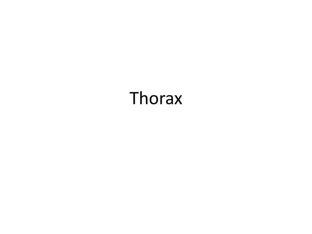 PPT - Thorax PowerPoint Presentation - ID:1984999