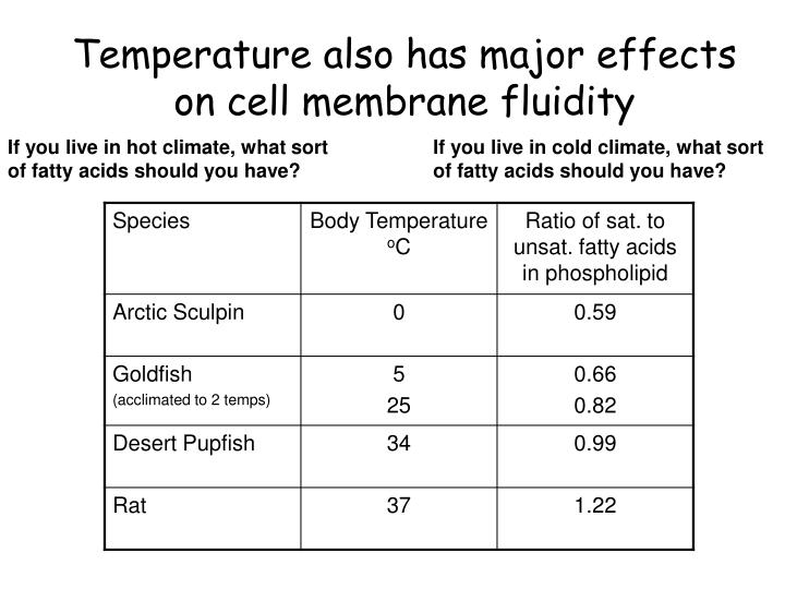 Temperature also has major effects on cell membrane fluidity