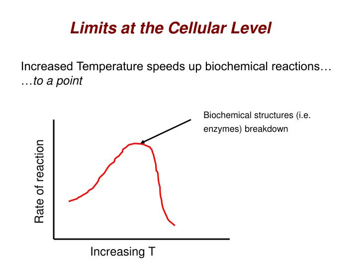 Biochemical structures (i.e. enzymes) breakdown