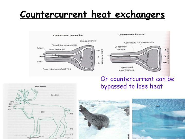 Countercurrent heat exchangers
