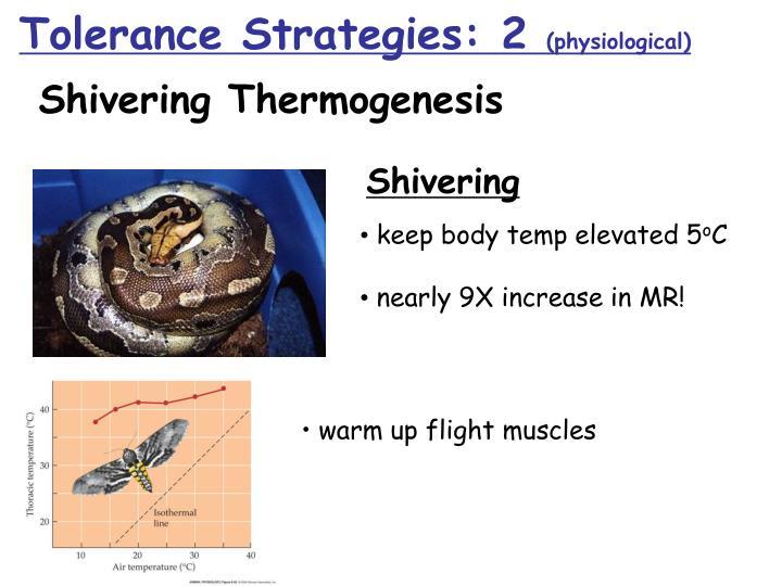 • warm up flight muscles