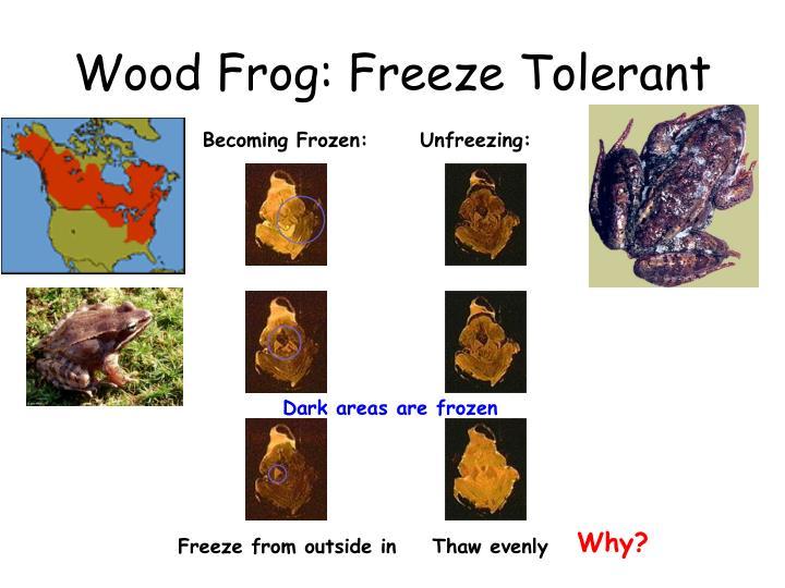 Becoming Frozen: