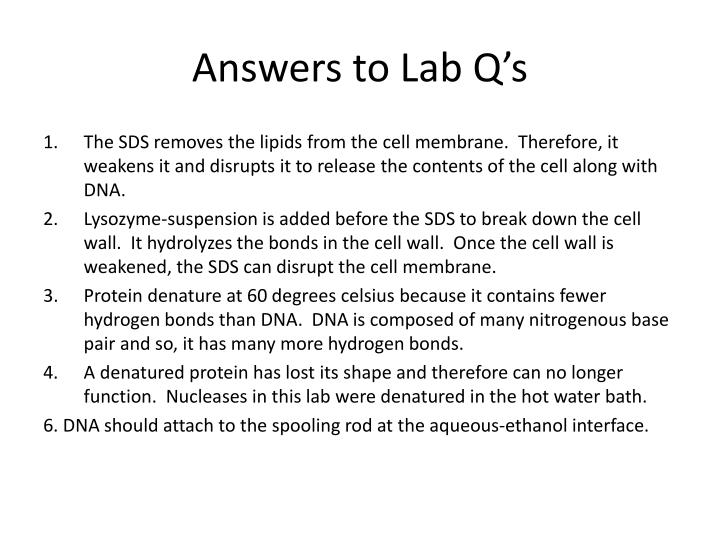 Answers to Lab Q's