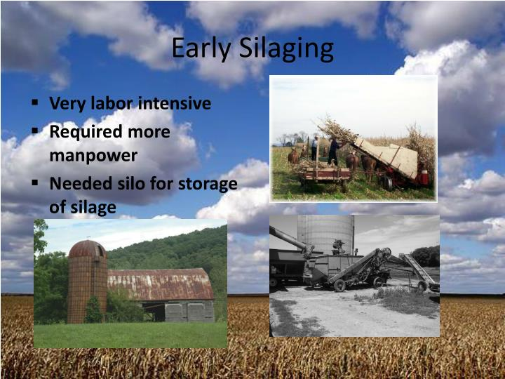 Early Silaging